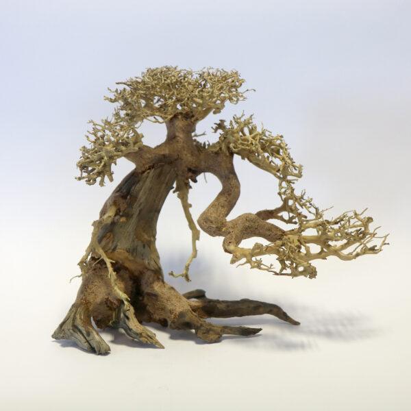 Bonsai Wood Medium Piece 30 x 23 x 17cm *New* MT019 ...